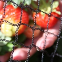 Anti Bird & Butterfly Netting