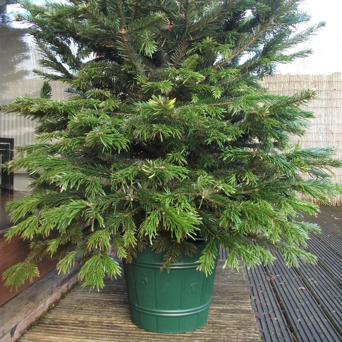 10ft christmas tree homebase