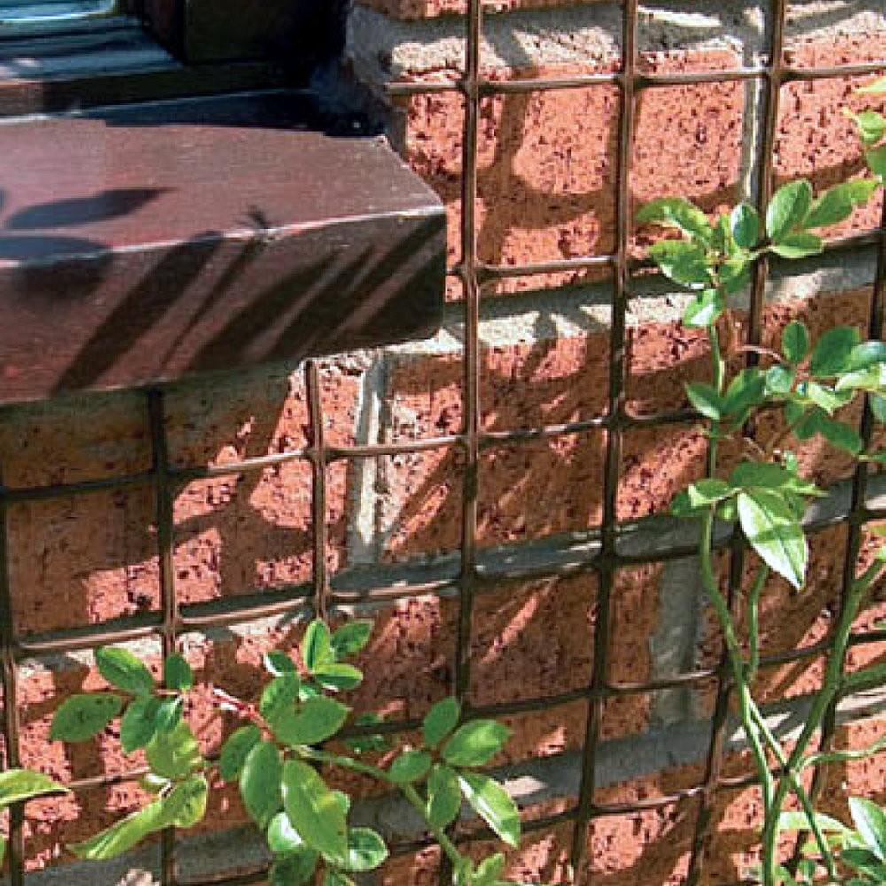 Clematis Trellis Fence