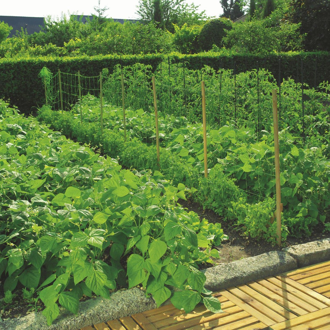 Pea & Bean Nets - 2m Wide