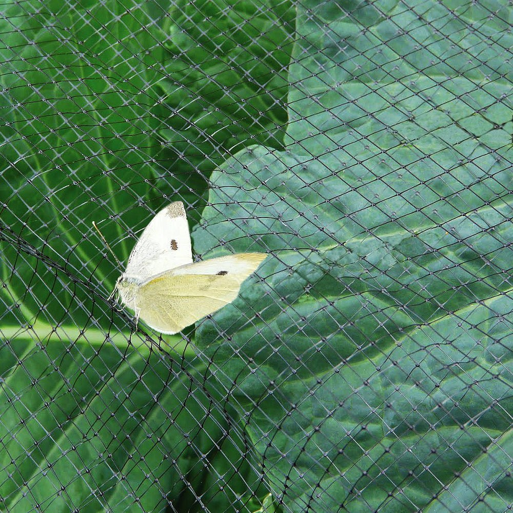 Anti-Butterfly Netting - 2m or 4m Wide by the METRE