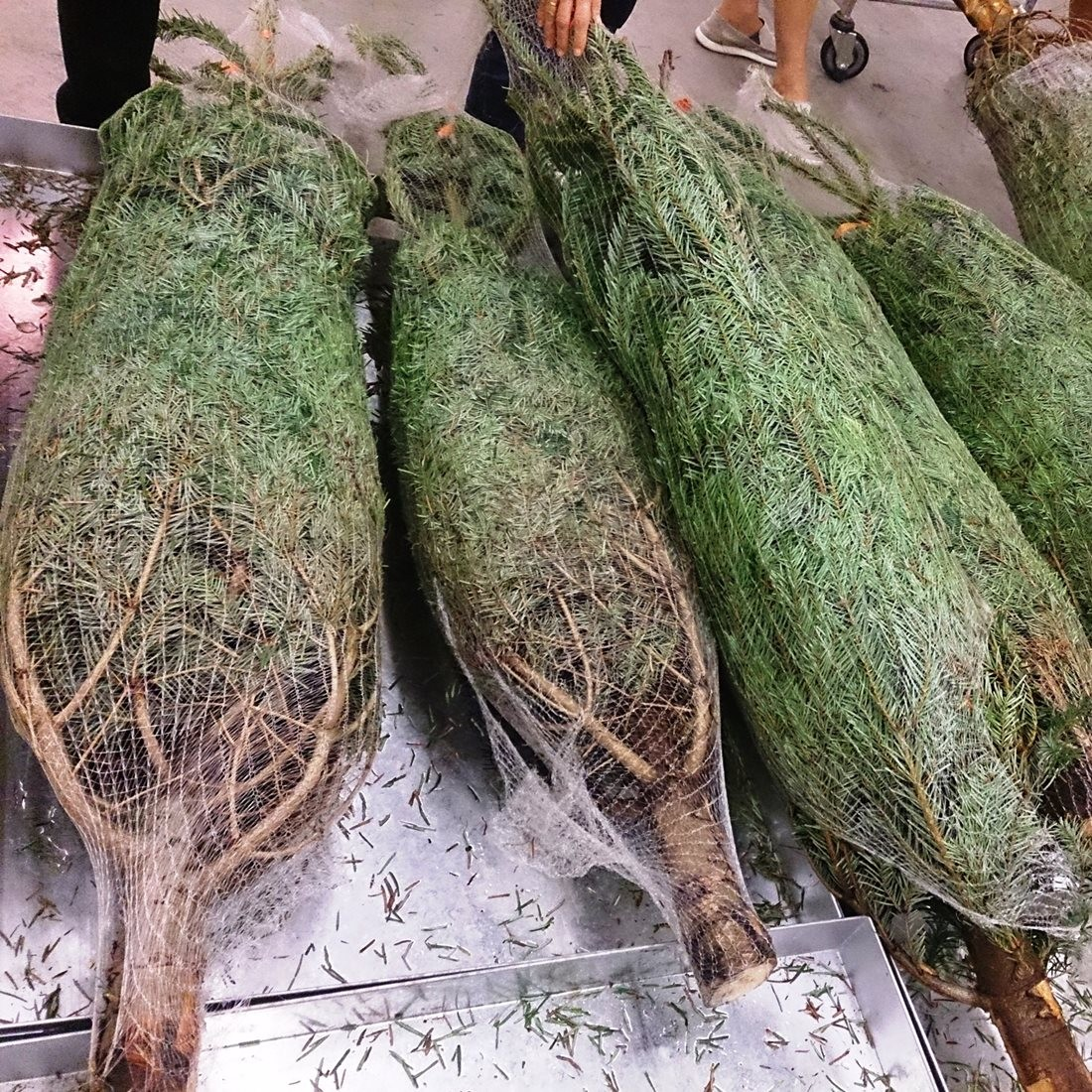 True Christmas Tree Netting Starter Kit 34cm 45cm Or 55cm