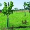 Tree Guard Pack of 10 - Green - 50cm x 12.5cm