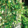 Climbing Plant Support Mesh - 50mm x 50mm - 0.5m or 1m Wide