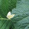 Anti-Butterfly Netting - 2m or 4m Wide Rolls