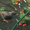 Anti-Bird Netting Plastic Diamond Mini Rolls